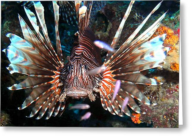 Greeting Card featuring the photograph Lion Fish - En Garde by Amy McDaniel