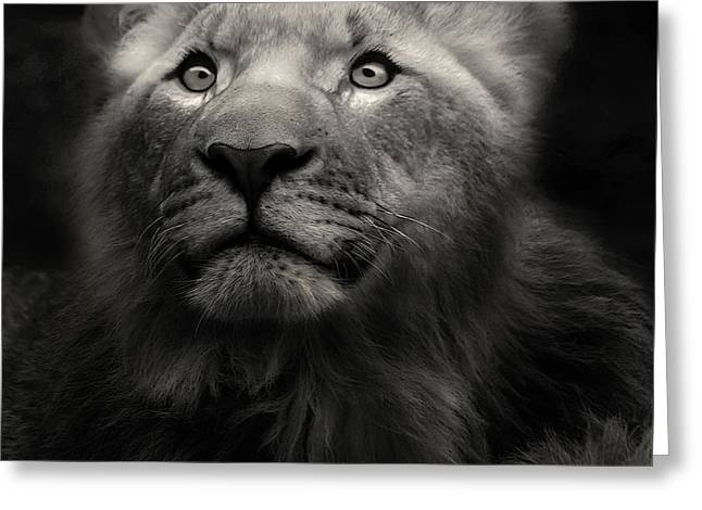 Lion In The Dark Greeting Card