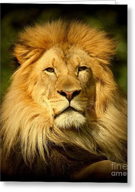 Lion King Greeting Card by Myrna Bradshaw