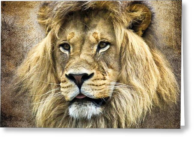 Lion King Greeting Card by Steve McKinzie