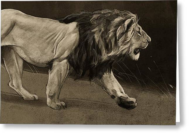 Lion Sketch Greeting Card by Aaron Blaise