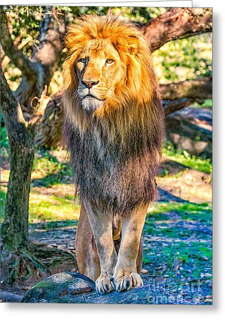 Lion Standing On Rocks Greeting Card by Stephanie Hayes