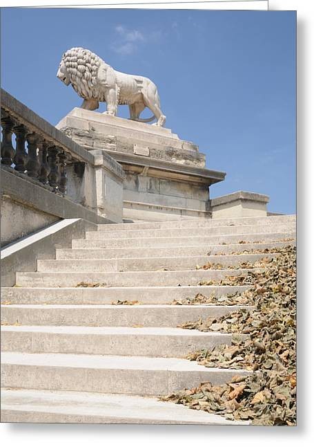 Lion Tuileries Garden Paris Greeting Card by Jeremy Voisey
