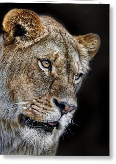 Lioness #2 Greeting Card by Nikolyn McDonald