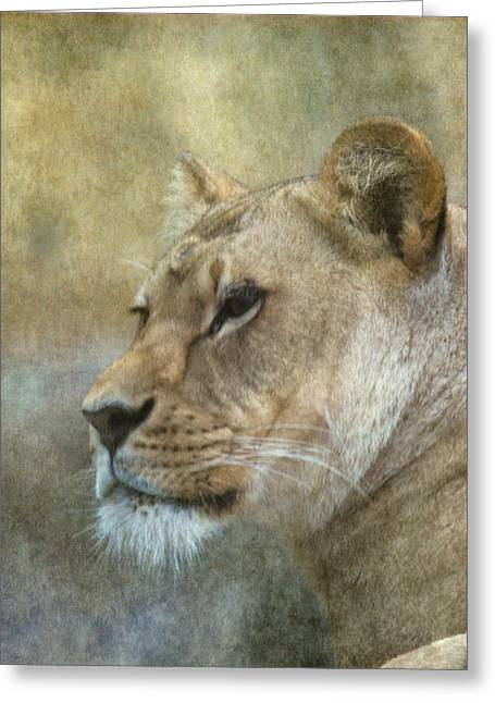 Lioness Greeting Card by Angie Vogel