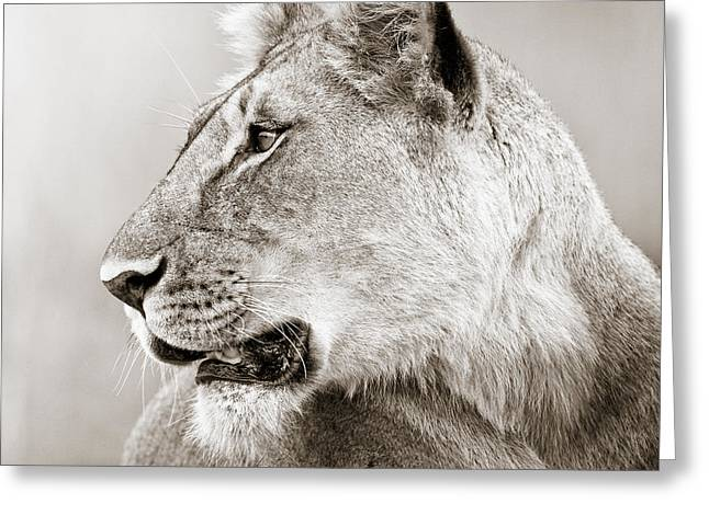 Lioness Masai Mara Kenya Greeting Card by Regina Mueller