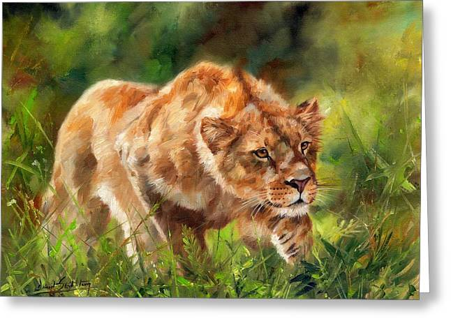 Lioness Stalking Greeting Card by David Stribbling