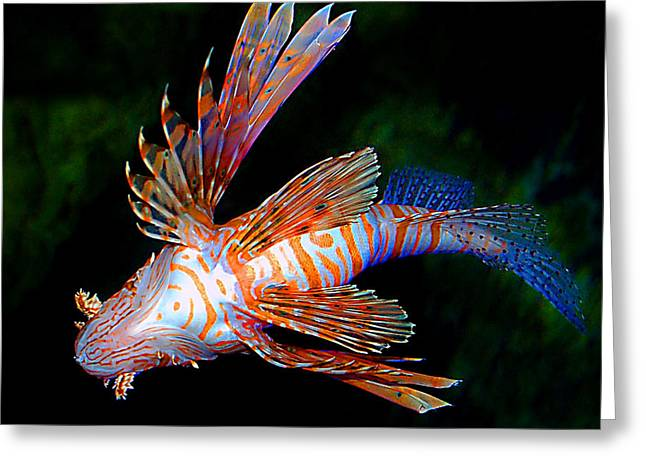 Greeting Card featuring the photograph Lionfish by Donna Proctor
