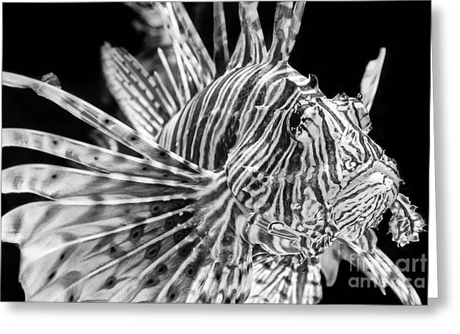 Lionfish Greeting Card by Jamie Pham
