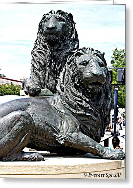Lions Of Marco Island Greeting Card by Everett Spruill