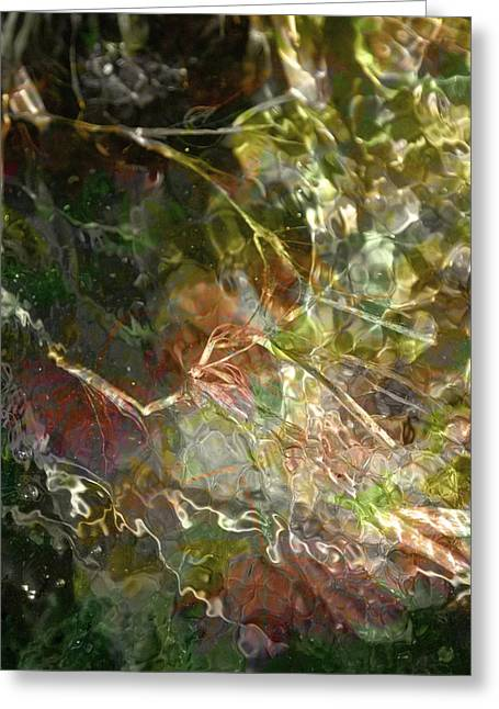 Liquid Leaves Greeting Card by Rich Collins