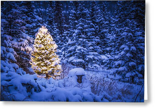 Lit Christmas Tree In Snow Covered Greeting Card by Jeff Schultz