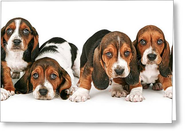 Litter Of Basset Hound Puppies Greeting Card by Susan Schmitz