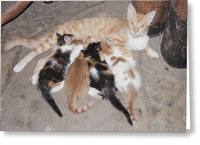 Litter Of Kittens With Mother Greeting Card by Science Photo Library