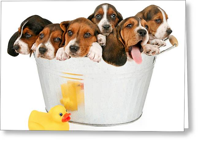 Litter Of Puppies In A Bathtub Greeting Card by Susan Schmitz