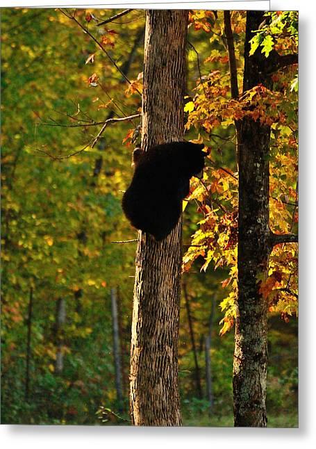 Little Bear Greeting Card by Joshua McCullough