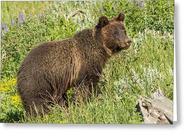 Little Bear Greeting Card by Sandy Sisti