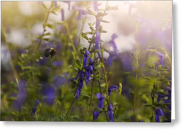 Little Bee In Flight Greeting Card by Toni Hopper