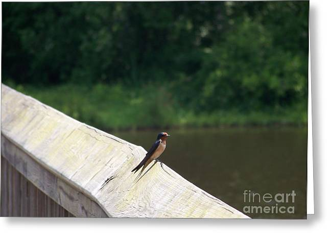 Little Birdie Greeting Card by Kevin Croitz