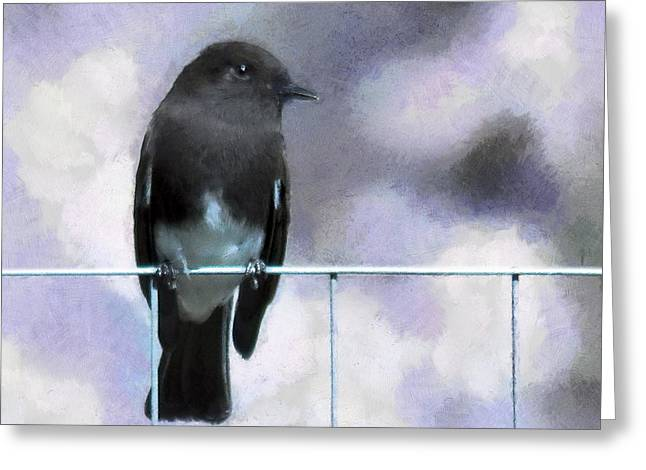 Little Black Phoebe Greeting Card