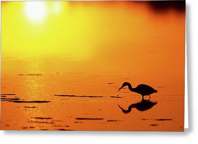 Little Blue Heron (egretta Caerulea Greeting Card
