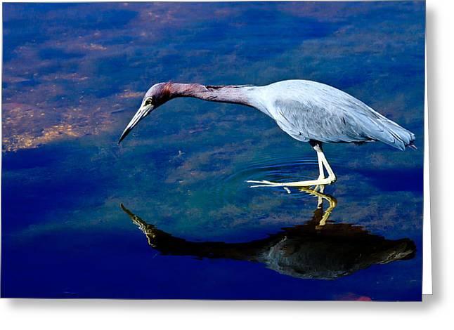 Little Blue Heron Fishing Greeting Card