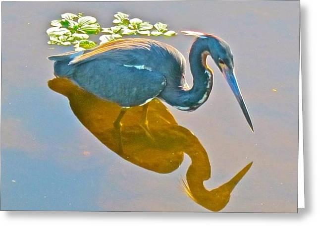 Little Blue Heron Hunting Greeting Card