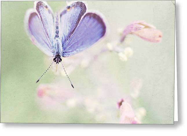 Little Blue Greeting Card