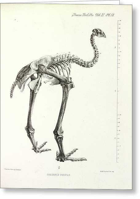 Little Bush Moa Greeting Card by Natural History Museum, London