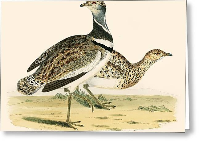 Little Bustard Greeting Card by Beverley R Morris