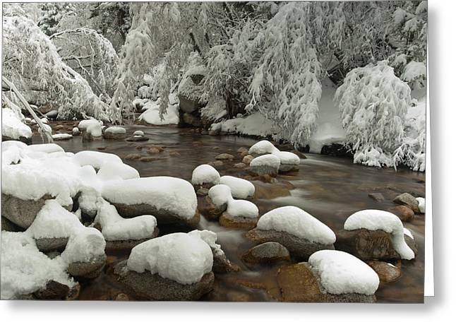 Little Cottonwood Creek And Flocked Greeting Card by Howie Garber