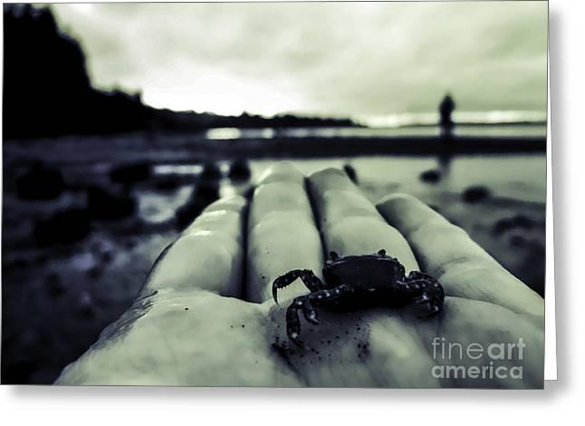 Little Crab 1 Greeting Card by Arlene Sundby