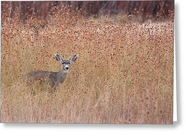 Little Deer Greeting Card by Ruth Jolly