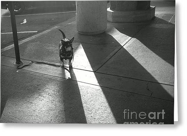 Greeting Card featuring the photograph Little Dog Big Shadow by Lennie Green