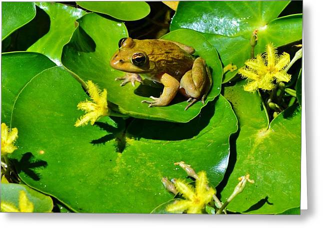 Little Frog Greeting Card