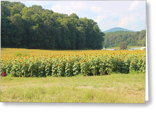 Little Girl And Big Sunflowers Greeting Card