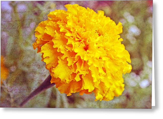 Little Golden  Marigold Greeting Card by Kay Novy