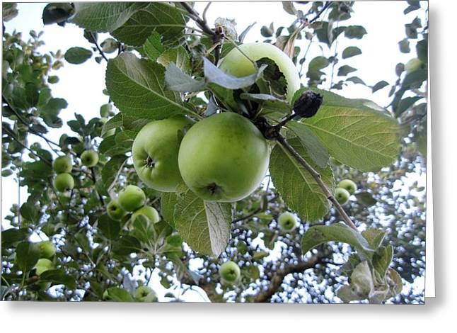 Little Green Apples Greeting Card by Patricia E Sundik