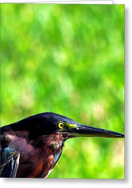 Little Green Heron 006 Greeting Card by Chris Mercer