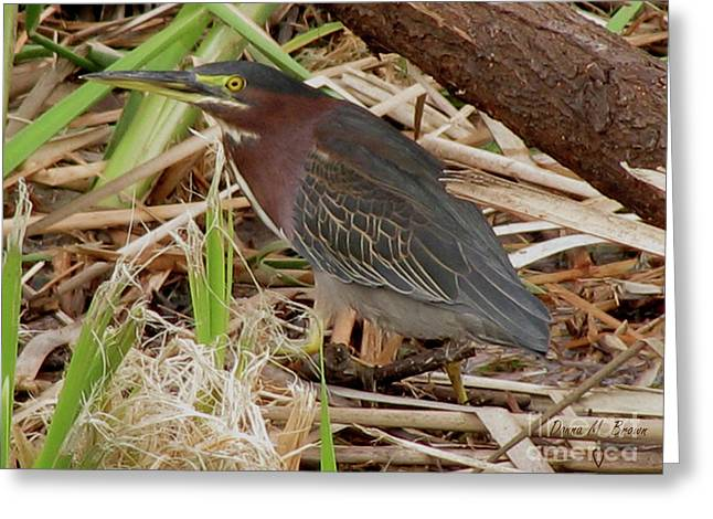 Greeting Card featuring the photograph Little Green Heron by Donna Brown