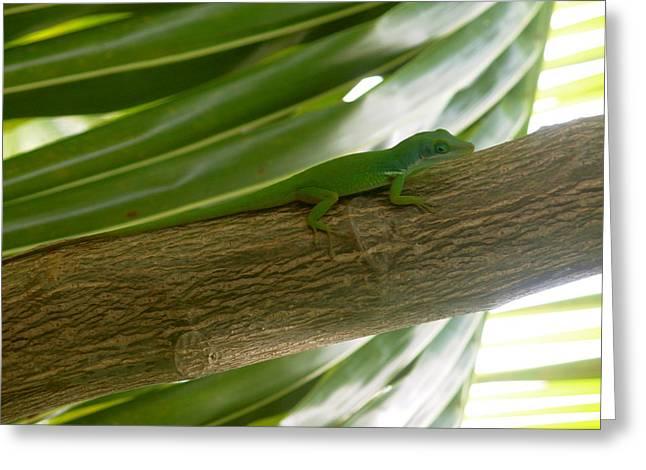 Little Haitian Lizard Greeting Card by Marianne Miles