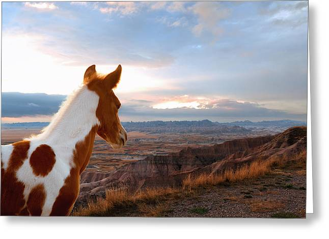 Little Horse In A Big World Greeting Card by Ron  McGinnis