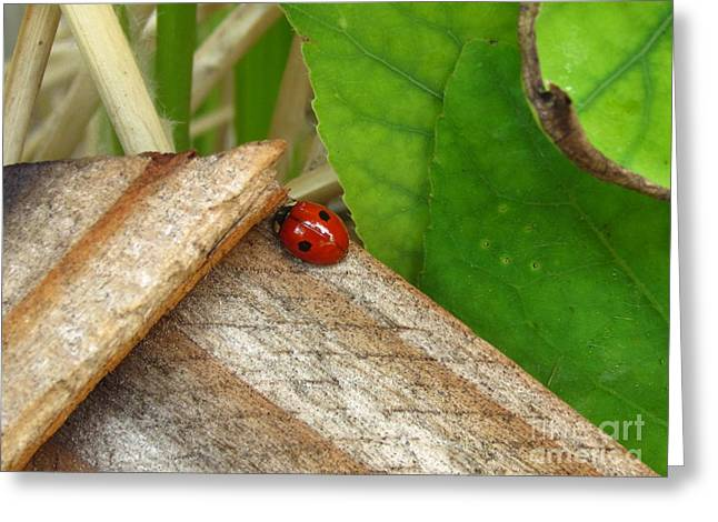 Little Lazy Ladybug Greeting Card