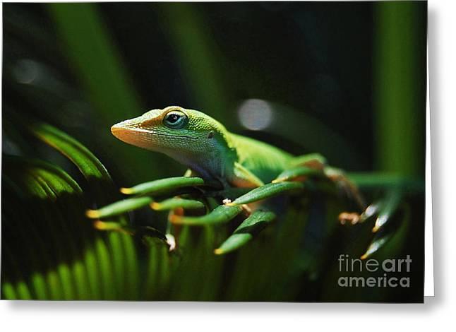 Little Lizard On A Sago Palm Greeting Card by Kathy Baccari