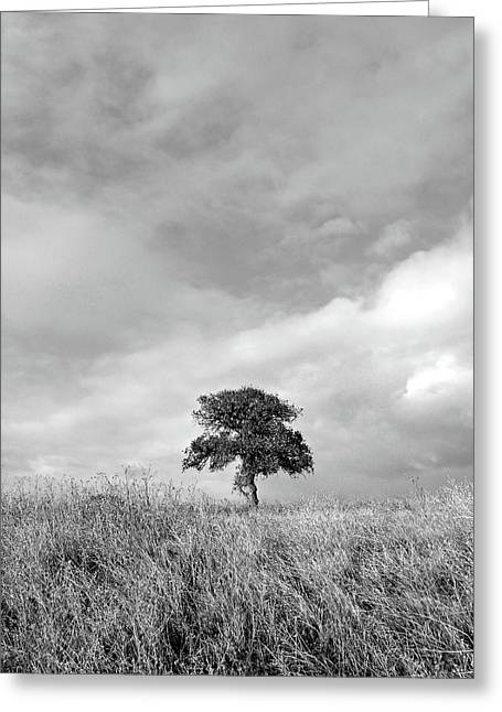 Little Lone Oak Tree Greeting Card