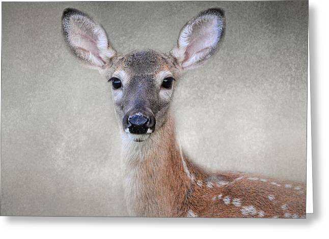 Little Miss Lashes - White Tailed Deer - Fawn Greeting Card
