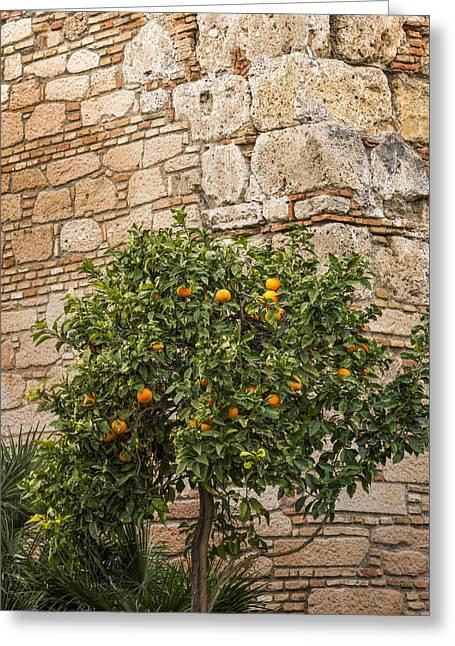 Little Orangetree Greeting Card