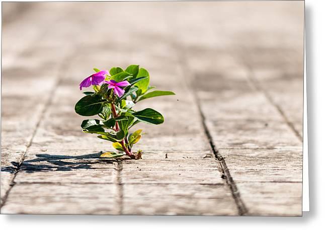 Little Plant Greeting Card by Salvatore Pappalardo