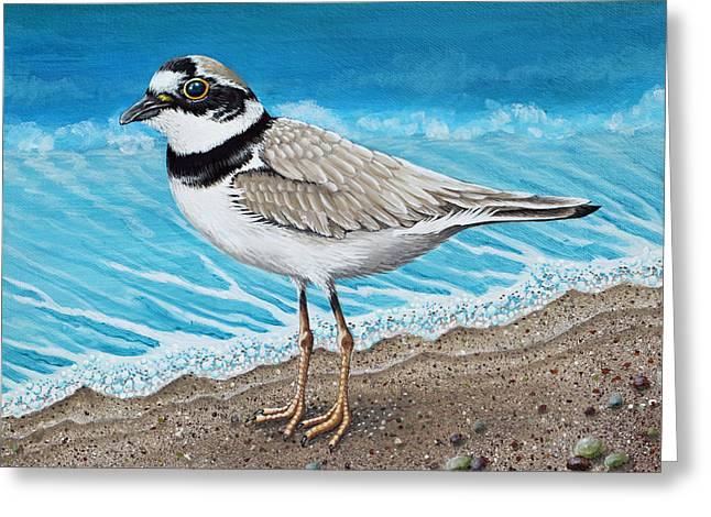 Little Plover Greeting Card