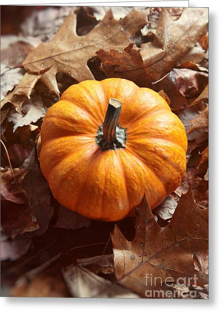 Little Pumpkin In A Bunch Of Leaves Greeting Card by Sandra Cunningham